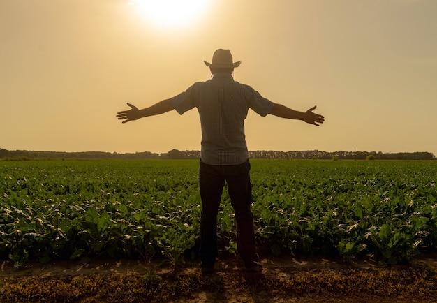 シニアファーマーは日没時にビートが成長している畑を調べます。挙手は豊作の象徴です。
