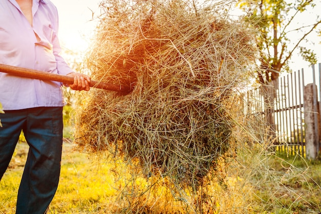 Senior farmer man gathers hay with pitchfork at sunset in countryside.