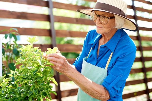 植物を見てシニアの庭師