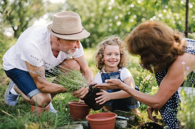 Senior grandparents and granddaughter gardening in the backyard garden