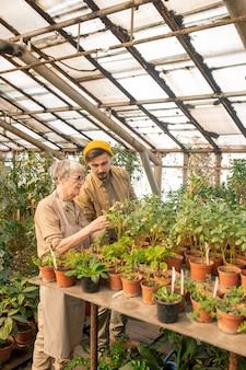 温室で若い助手と一緒に植物の葉のバグをチェックするシニア栽培者