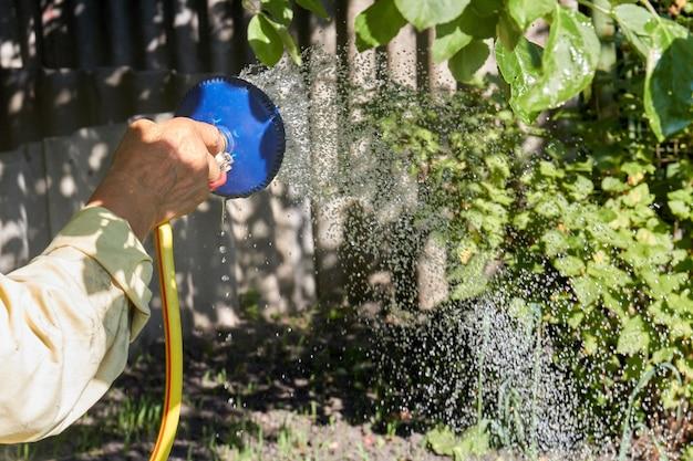 Senior hand holding sprinkler and watering the garden plants