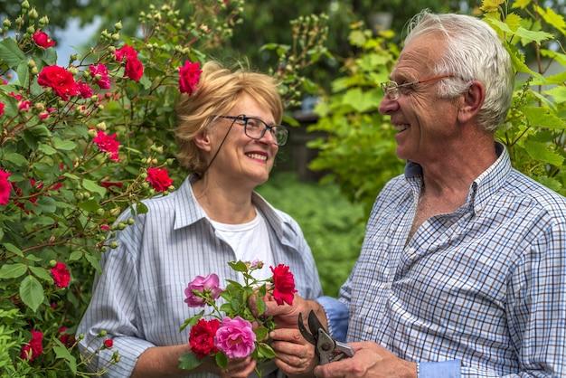 シニア幸せな笑顔の男性と女性のカップルは晴れた日にバラをカットしました。春と夏のガーデニング