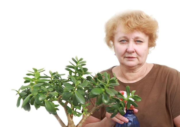 Senior lady wipes foliage on a plant. isolated over white.