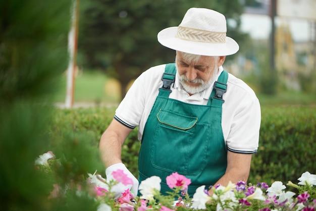 Senior male worker cutting flower in drawer in garden.