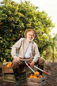 Старший мужчина, выращивающий апельсины