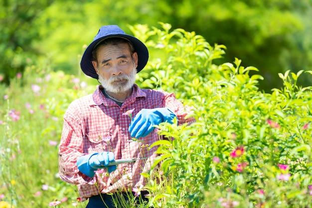 年配の男性が自宅の庭の木から乾燥した芽を切る