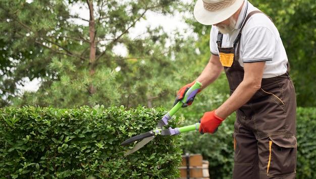 年配の男性が草に覆われた茂みをカットします。