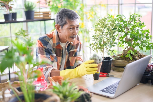 A senior man entrepreneur working with laptop presents houseplants during online live stream at home, selling online concept