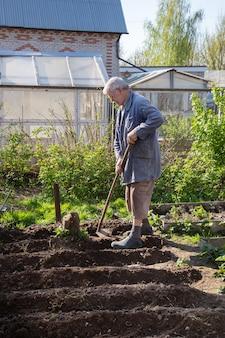 年配の男性庭師がジャガイモを植えている