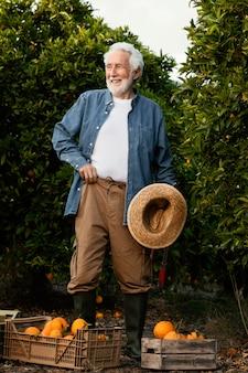 Uomo maggiore che raccoglie alberi di arancio da solo