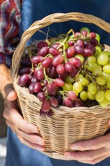 Senior man holding in hands harvest of grapes