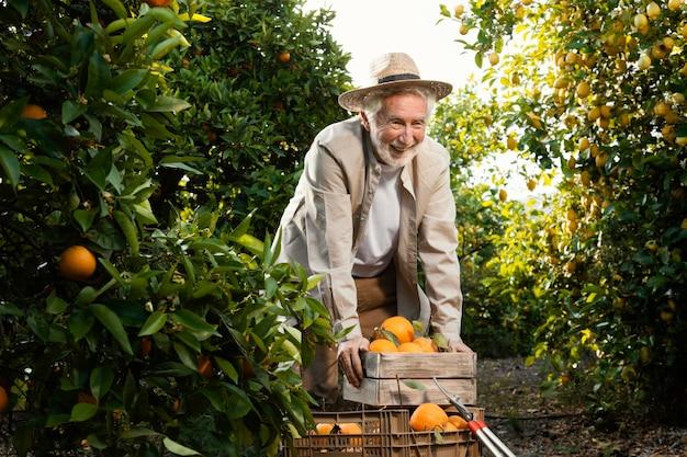 Uomo maggiore nella piantagione di alberi di arancio