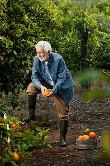 그의 오렌지 나무 옆에 서있는 수석 남자