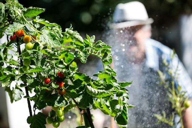 Старший мужчина поливает растения со шлангом