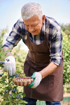 Uomo maggiore che lavora nel campo con la frutta
