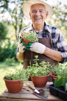 Uomo maggiore che lavora nel campo con le piante