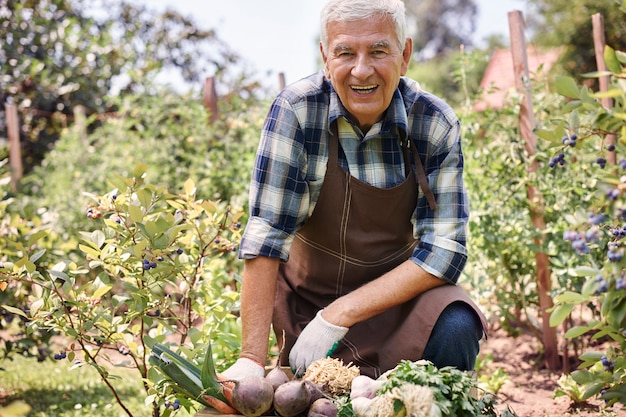 Uomo maggiore che lavora nel campo con le verdure