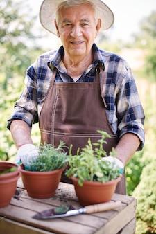 Старший мужчина, работающий в поле с цветами