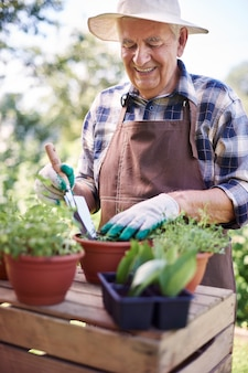 Старший мужчина, работающий в поле с растениями