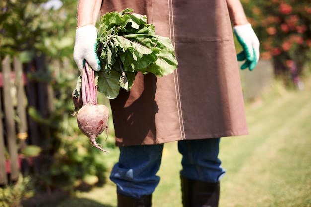 야채와 함께 분야에서 일하는 수석 남자