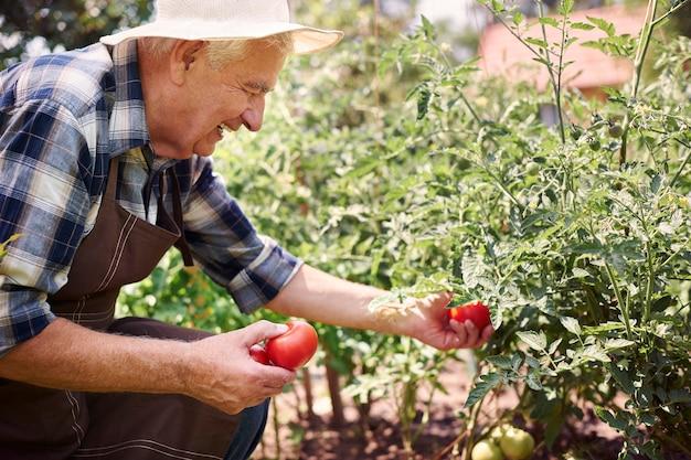 野菜と一緒に畑で働く年配の男性
