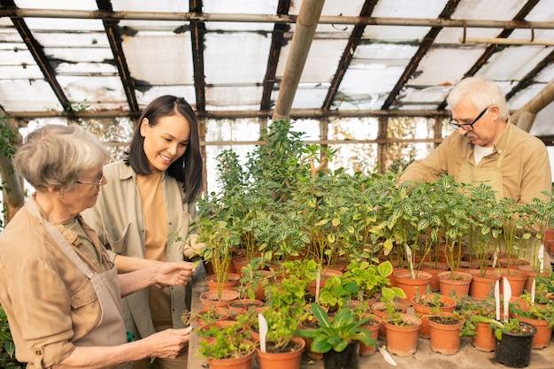 Старшие люди и азиатская девушка, стоящие за столом в теплице и изучающие каждое растение в горшке