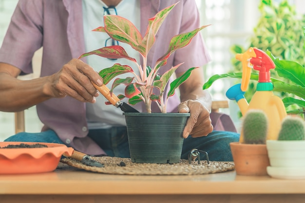 Senior retired man is planting inside his home for happy retirement relaxing lifestyle.