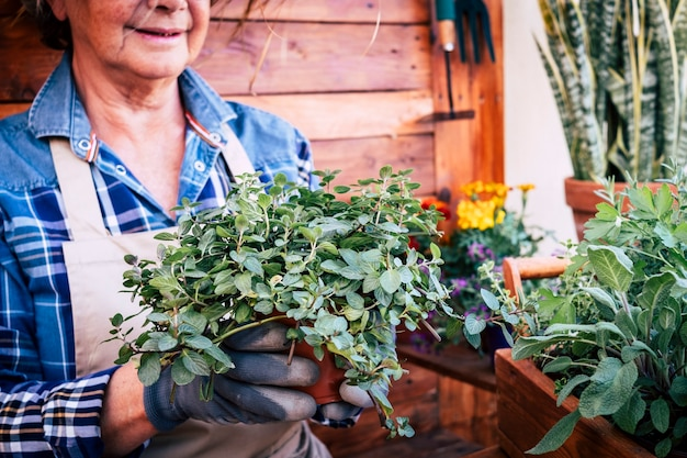 植物やハーブでガーデニングを楽しんでいる年配の女性。アクティブな引退した高齢者の概念。木製の素朴な背景とテーブル
