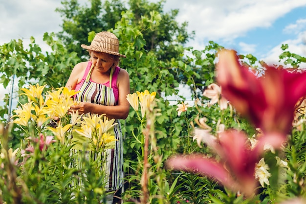 Senior woman gathering flowers in garden. middle-aged gardener cutting lilies off with pruner. gardening concept