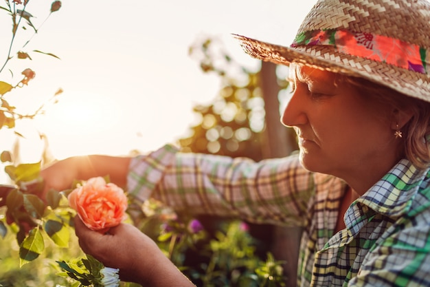 Senior woman gathering flowers in garden. middle-aged woman cutting roses off.