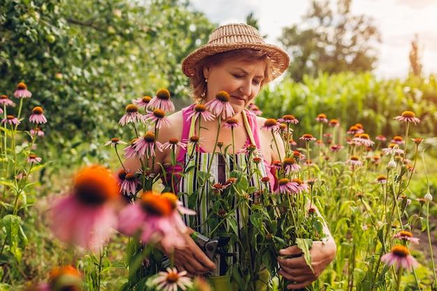 Старшая женщина собирая цветки с секатором в саде
