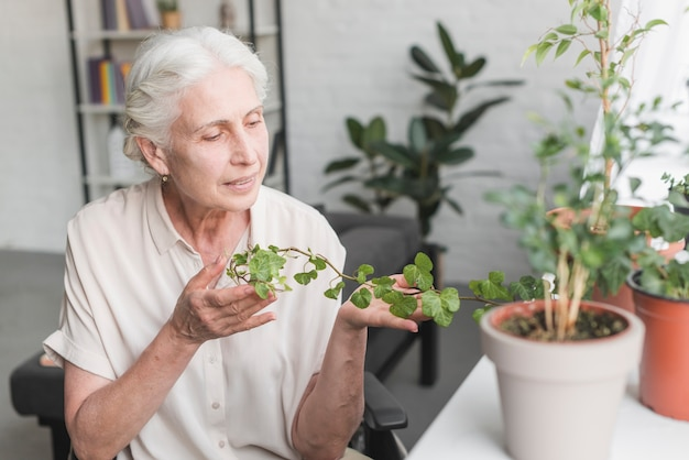 Senior woman looking at growing green ivy in pot