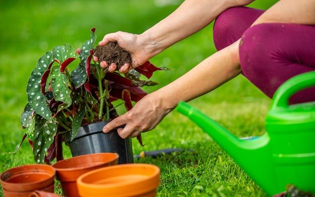 彼女の新しい植物や花を広大な庭に植える年配の女性、ガーデニングの概念
