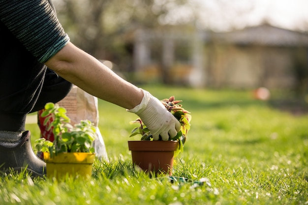 Senior woman transplanting some flowers to a pot, gardening concept