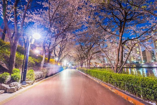 Парк озера сеокхон ночью и вишневый цвет весны в сеуле, южная корея