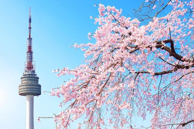 서울 타워와 핑크 벚꽃, 봄의 사쿠라 시즌, 한국 서울