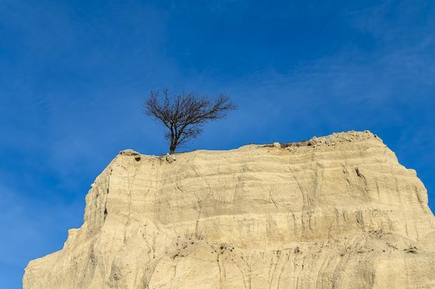 空に対して崖の上に別の木