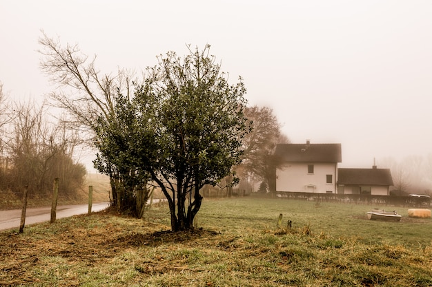 木のセピア色のショット、バックグラウンドで霧と白い家