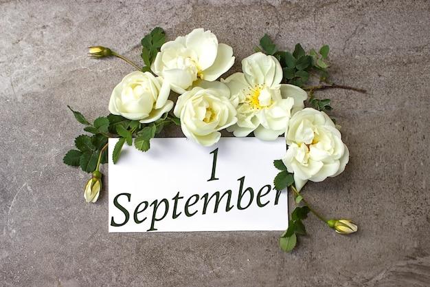 9月1日。月の1日目、カレンダーの日付。白いバラは、カレンダーの日付とパステルグレーの背景に国境を接します。秋の月、年の日の概念。