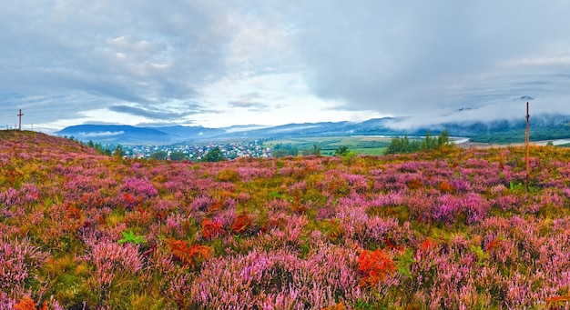 September morning country foothills panorama with heather flowers and wooden cross (lviv oblast, ukraine)