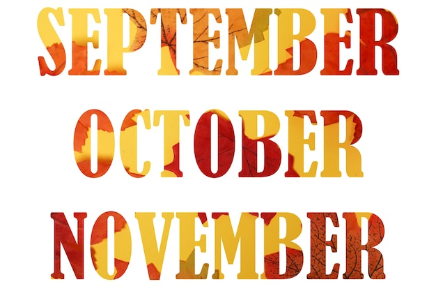 9월, 10월, 11월 빨간색과 노란색 잎의 텍스트입니다. 흰색 배경에 고립 된 가을 달 단어