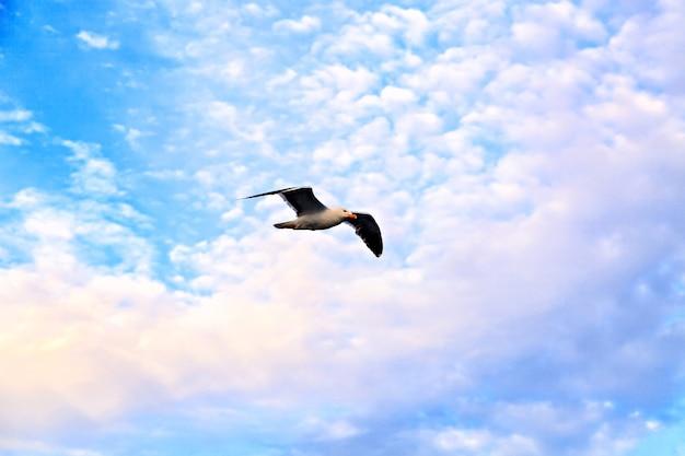 静かな空を飛ぶ孤独なカモメ