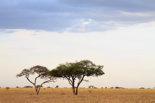 セレンゲティ国立公園の風景、タンザニア、アフリカ。アフリカのパノラマ