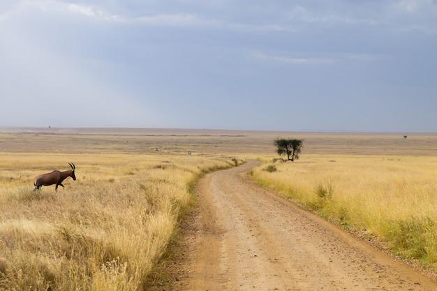 세렝게티 국립 공원 풍경, 탄자니아, 아프리카. 아프리카 파노라마
