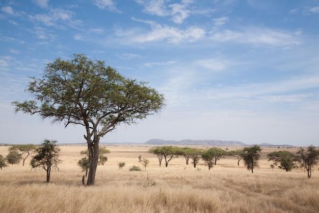 세렝게티 국립 공원 풍경, 탄자니아, 아프리카