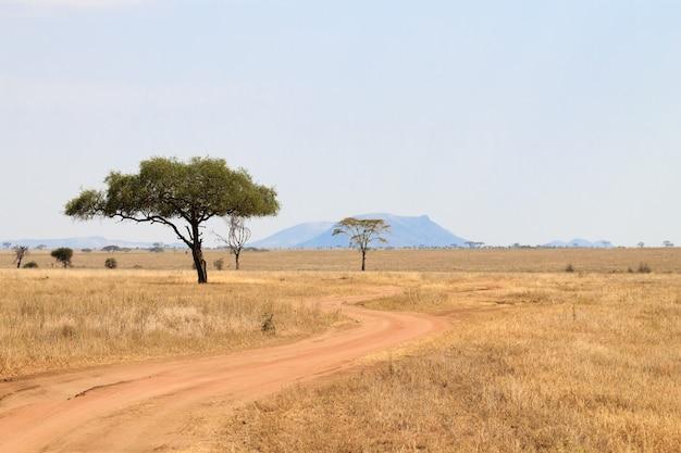 セレンゲティ国立公園の風景、タンザニア、アフリカ