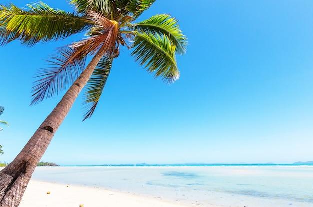熱帯のビーチに沈む夕日