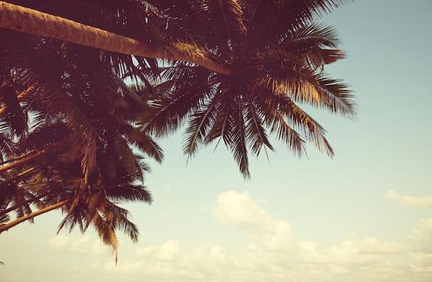 セレニティトロピカルビーチ、instagramフィルター