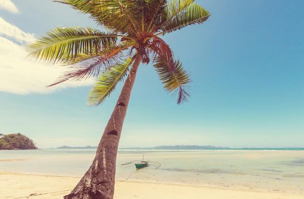 静けさのトロピカルビーチ
